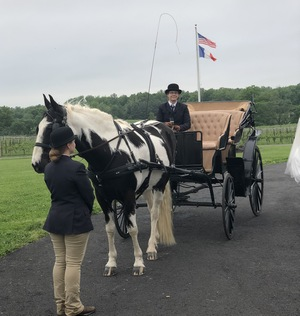Greenhill Vineyards carriage rides